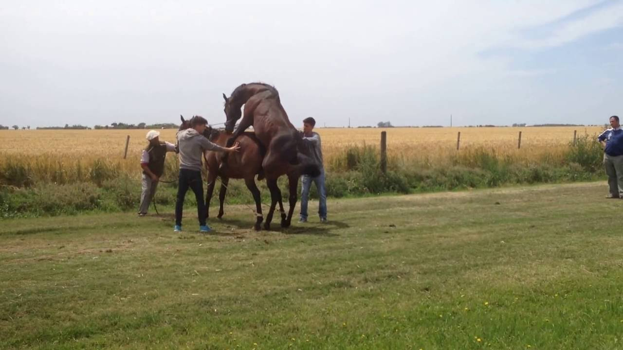 Horse's mating process - YouTube