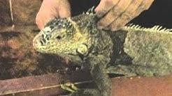 Reptiles, la ferme des reptiles de la Bastide de Sérou en Ariège.