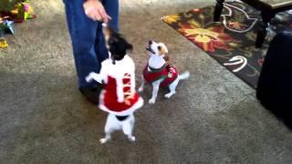 Танцующие собаки