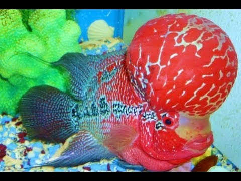 Top 10 most beautiful fishes in the world most beautiful for Best fish in the world