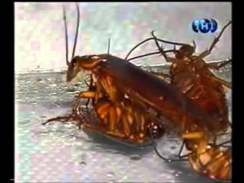 Причины вызывающие появление тараканов в доме