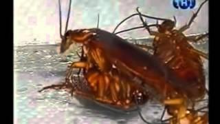 Причины вызывающие появление тараканов в доме(, 2015-11-18T14:40:53.000Z)