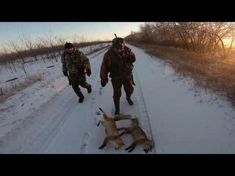 ОХОТА НА ЗАЙЦА 2019! Охота на лисиц. Первая охота по снегу. Тропление зайца!