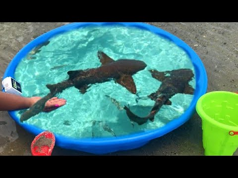 DIY POOL FISH POND At BEACH!!!