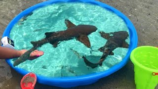 diy-kiddie-pool-fish-pond-at-beach