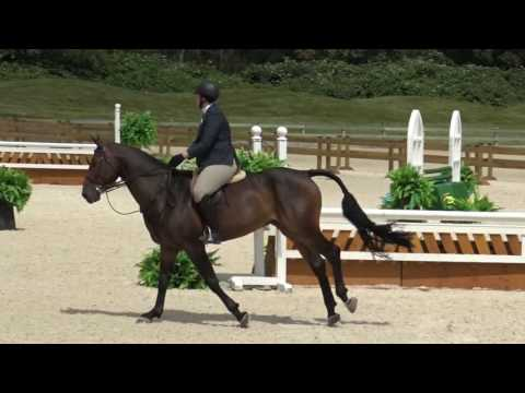 Boston Sale Horse July 2016  new