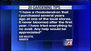 20 Gardening Tips: Blooming Rhododendrons
