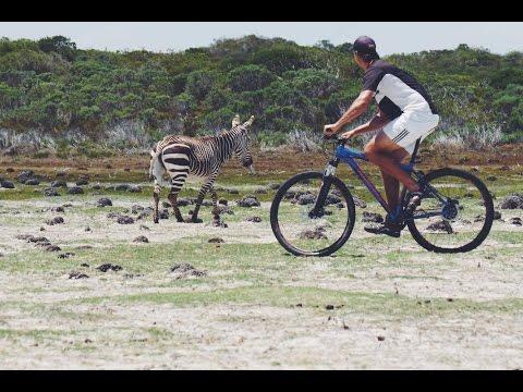 SAFARI ON MOUNTAIN BIKES | De Hoop South Africa