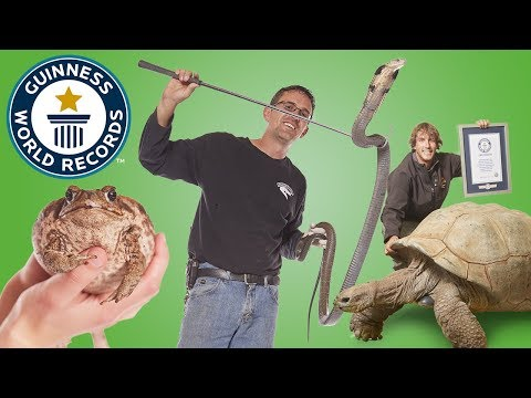 Largest Reptile Zoo – Meet The Record Breakers