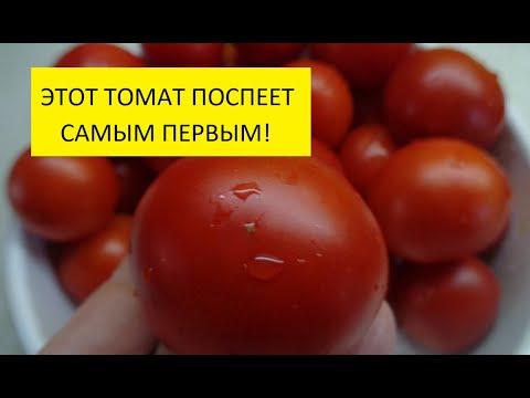 """ТОМАТ """"РЕНЕТ"""" ПОСПЕВАЕТ ПЕРВЫМ. ПОДРОБНЫЙ ОБЗОР. Ольга Чернова."""
