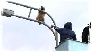 ПРИКОЛЫ С ЖИВОТНЫМИ | FUN WITH ANIMALS #424