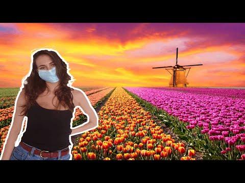 Коронавирус в Нидерландах. Выход из карантина. Последние новости о  Covid 19