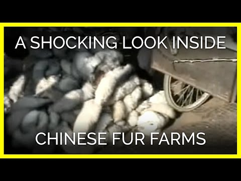 What are some good things about using REAL animals for their fur?