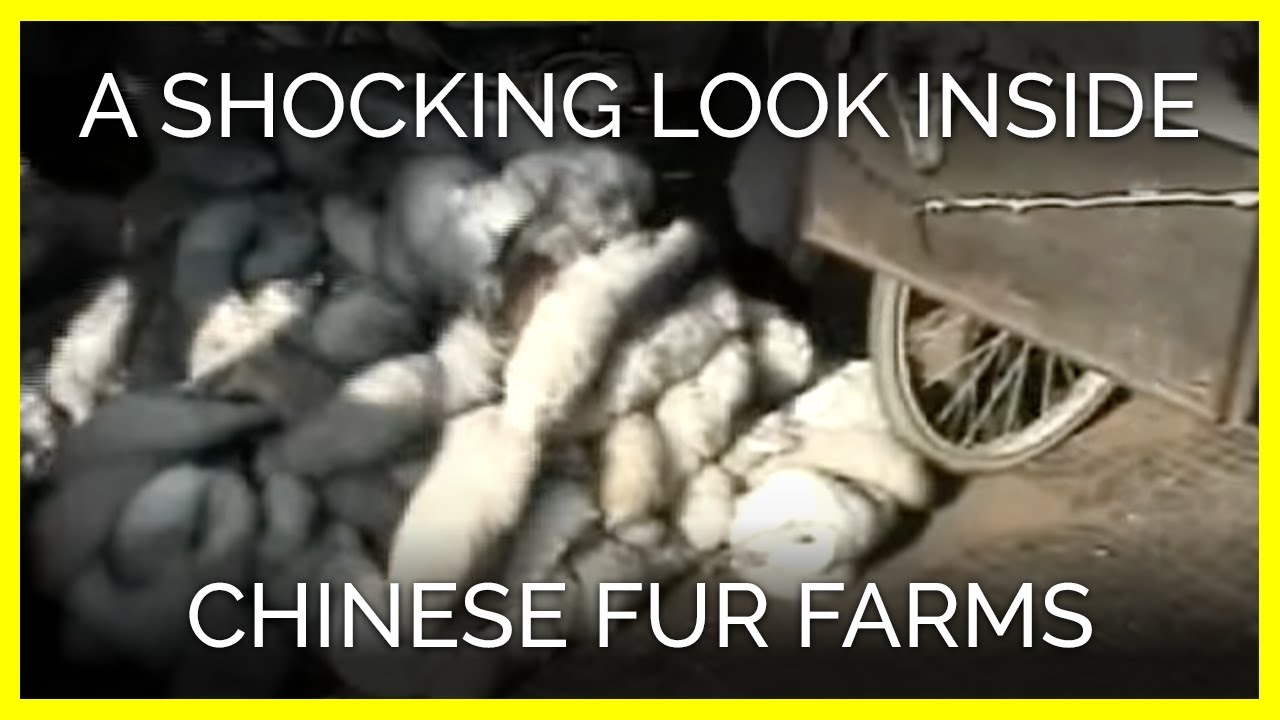 The Chinese Fur Industry | PETA