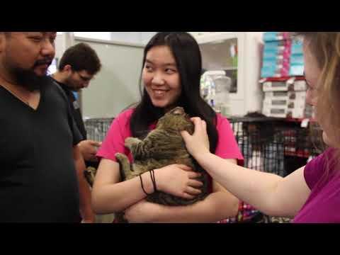 Miss Pat's Cats Adoption At PetCo 4/14/19!