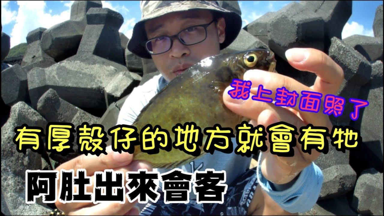 【魚樂百分百】有厚殼仔的地方就會有臭肚的出現