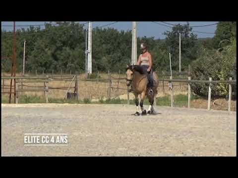 Poney de Dressage - Potentiel As et FEI