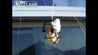 【クモすげえ!】 クモ vs ハチ。生きたハチをロックオン! thumbnail