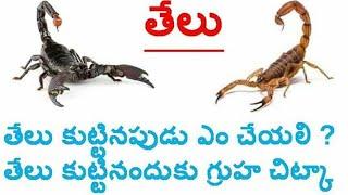 Scorpion bite treatment in Telugu! తేలు కుట్టడం మరియు దాని చికిత్స గురించి పూర్తి వివరణ