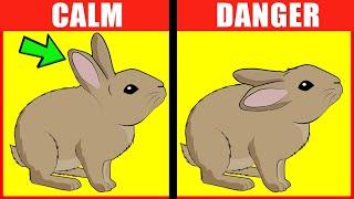 Rabbit Body Language Explained