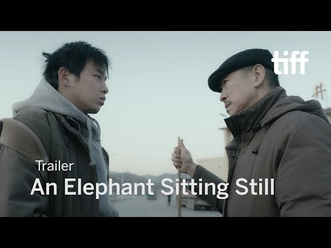 An Elephant Sitting Still review – melancholic and mesmerising