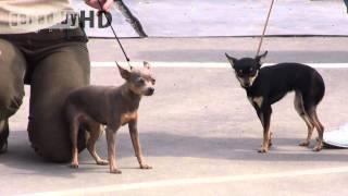 Могилёв. Республиканская выставка собак всех пород