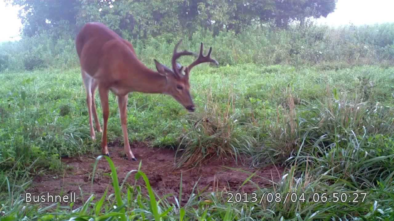 Site homemade deer mineral lick