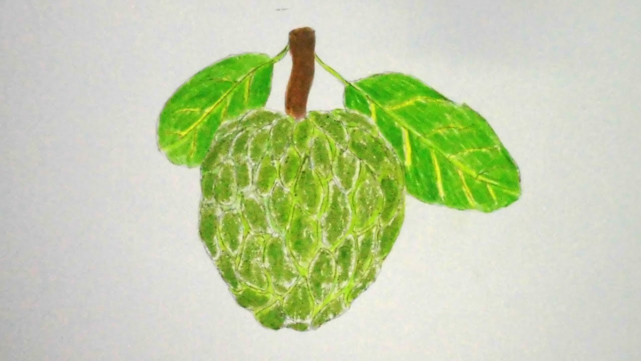 How To Draw Custard Apple Step By