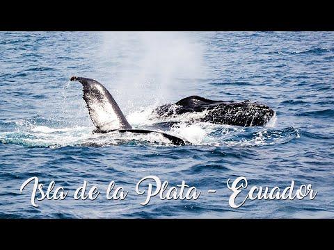 Travel/Ecuador/Puerto Lopez/Isla de la Plata