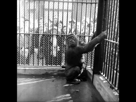 Guy the Gorilla (1976) with lyrics in description.