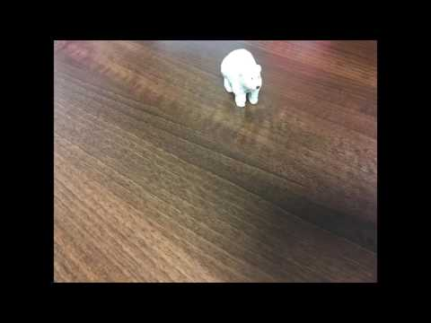 STU48811 - Module 5 - Polar Bear Experiment 3
