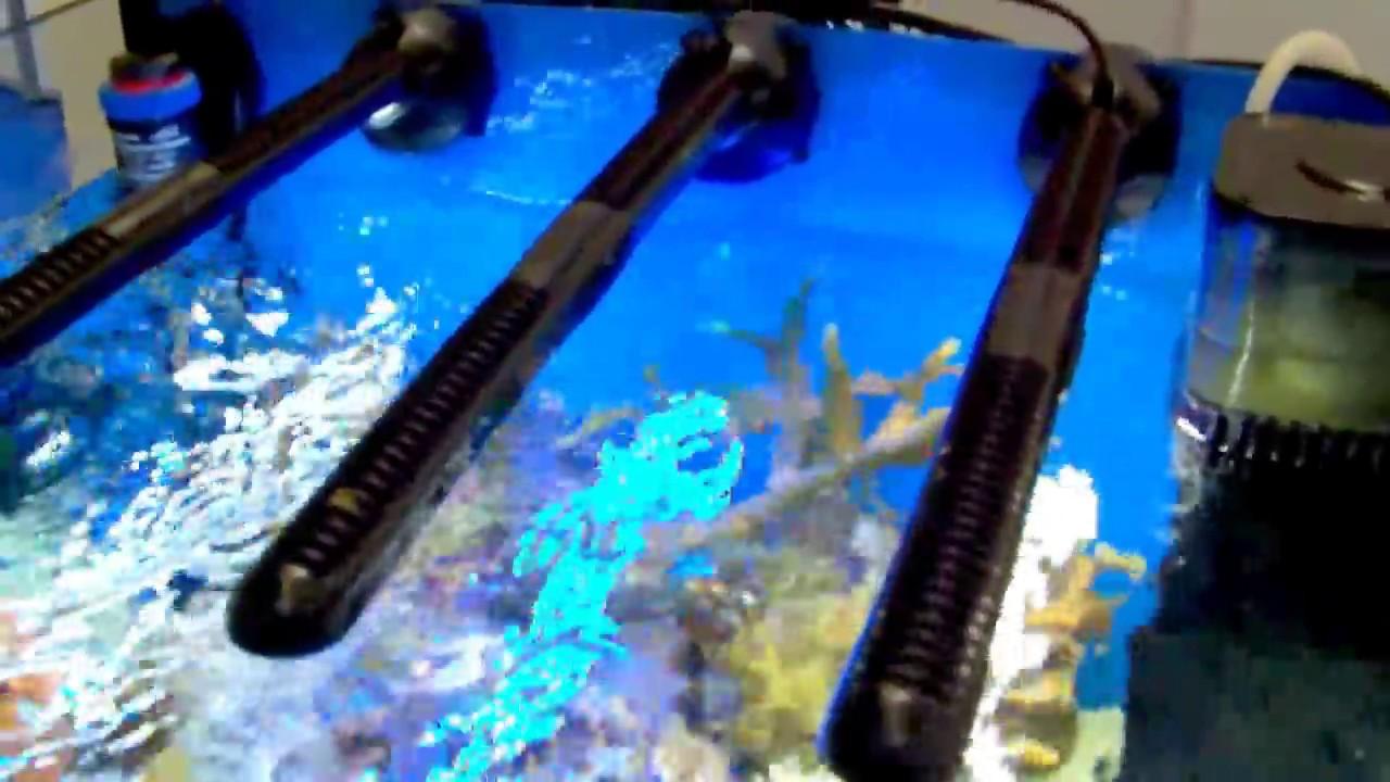 3x tunze led doc skimmer in nano tank at interzoo 2012 youtube