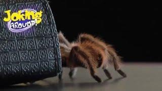 Huge tarantula in hair!!   Joking Around