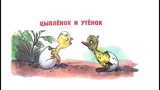 Цыплёнок и утёнок Сутеев С картинками Читаем детям