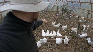 Make a living homesteading