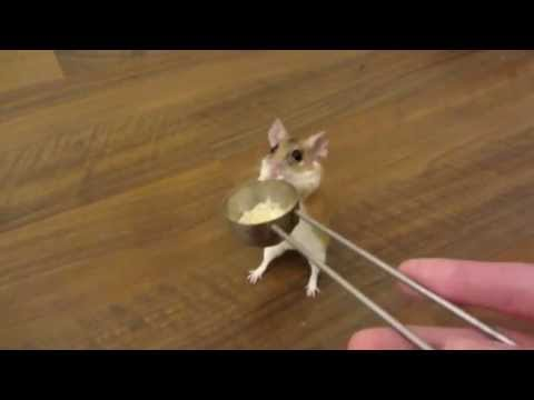 how to teach a mouse to spin on cue