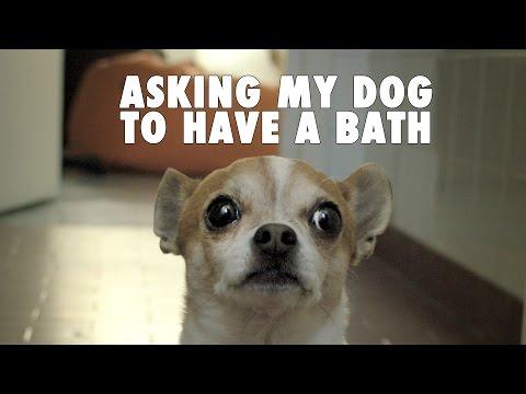 Do chihuahuas like bath?