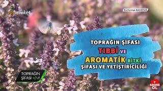 Toprağın Şifası - Tıbbi ve Aromatik Bitki Şifası ve Yetiştiriciliği
