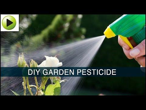 Homemade Garden Pesticide