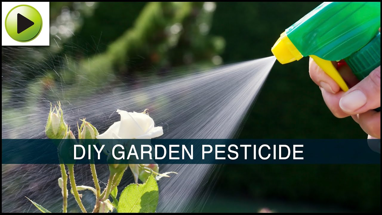 Homemade Garden Pesticide YouTube