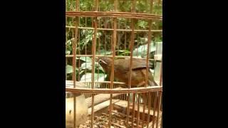 Nhac Viet Nam | video chim hoa mi dep | video chim hoa mi dep