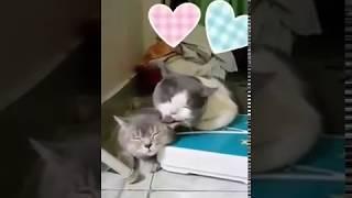 Cat loves