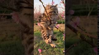 Fluffy kitten sees the full blossoms for the first time and is smitten with the wonderful color!