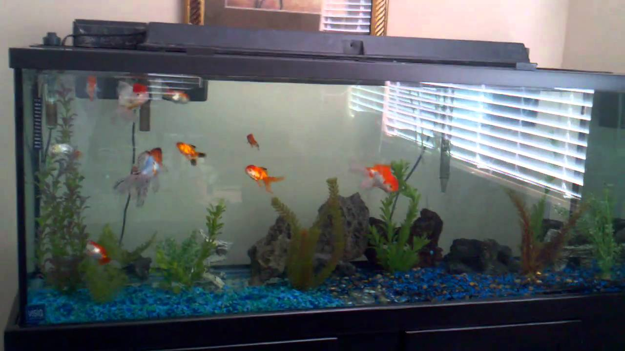 100 gallons 11 goldfish youtube. Black Bedroom Furniture Sets. Home Design Ideas