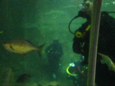 Underwater Ocean World - Manly Beach -Sydney.wmv