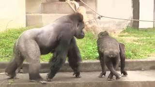 Existe homossexualidade no mundo animal?