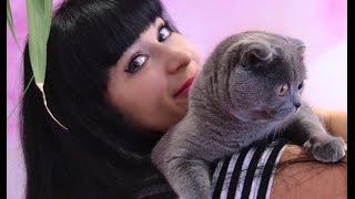 Британские и Шотландские котята .Новорожденные котята 9 дней.