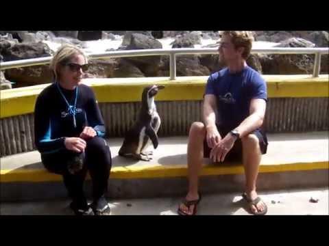 Sea Life Park Hawaii Internship Spring 2014