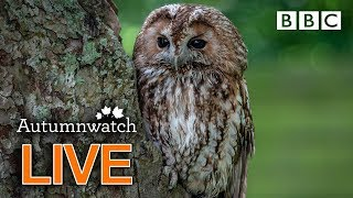 Cute wildlife cams UK 31 Oct  | BBC Autumnwatch
