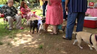 Pug Party Zoomies